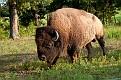 Bison 8554
