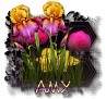 Amy - 3094