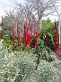Arid Garden Red and Amber Reeds09
