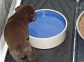 Abbey pups 20080628 40