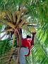 Bon Coco Ole - Jacmel