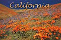 05- CA State Flower