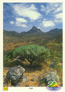 Cape Verde - DRAGON TREE NTR