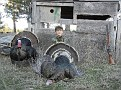 Kyle w Gobbler #2 Along w Cutter in Front of Turkey Blind 40712
