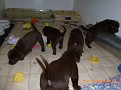 March 18 2012 Callie pups (9)