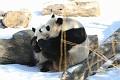 070216 Natl Zoo325