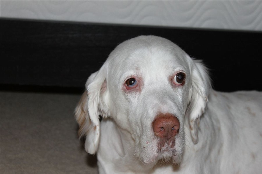 Symptoms Of Horner S Syndrome In Dogs