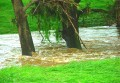 Storm Damage Molong Creek 005
