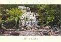 TASMANIA - Liffey Falls State Reserve