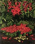 Red Currants [undated]