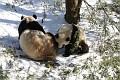 070216 Natl Zoo406