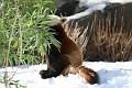 070216 Natl Zoo198