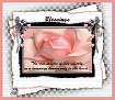 Blessings-gailz-pink rose