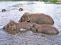Elephants005