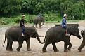 Mae Taeng Elephant Park Show (118)