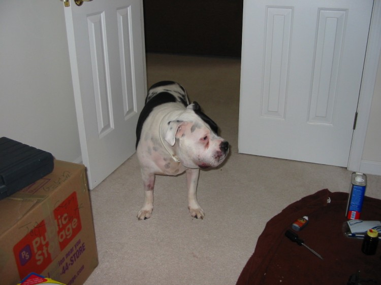 bufferin or ascriptin for dog arthritis pain?   Yahoo Answers