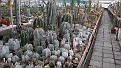 Nursery Cacti collection