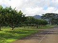 Kilauea - Pili Rd09.JPG