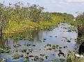 Everglades Tour25