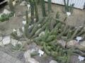 Vystava kaktusu 2005 (14)