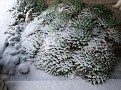 a Lot more of snow !! The Aloe aristata