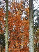 Farbe im Fichtenwald