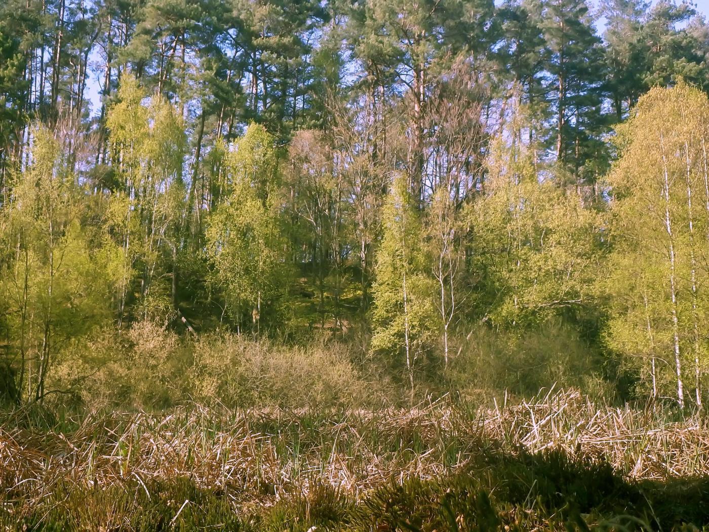 Furlbach Quellmoor