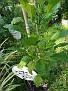 Plants Names DX7 212
