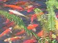 Morikami Japanese Gardens18