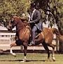 AFIRE #66323 (*Bask++ x *Wirginia, by *Naborr) 1970 chestnut mare bred by Lasma Arabian Stud