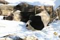 070216 Natl Zoo341