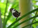 Butterfly World Butterflies Close Up22