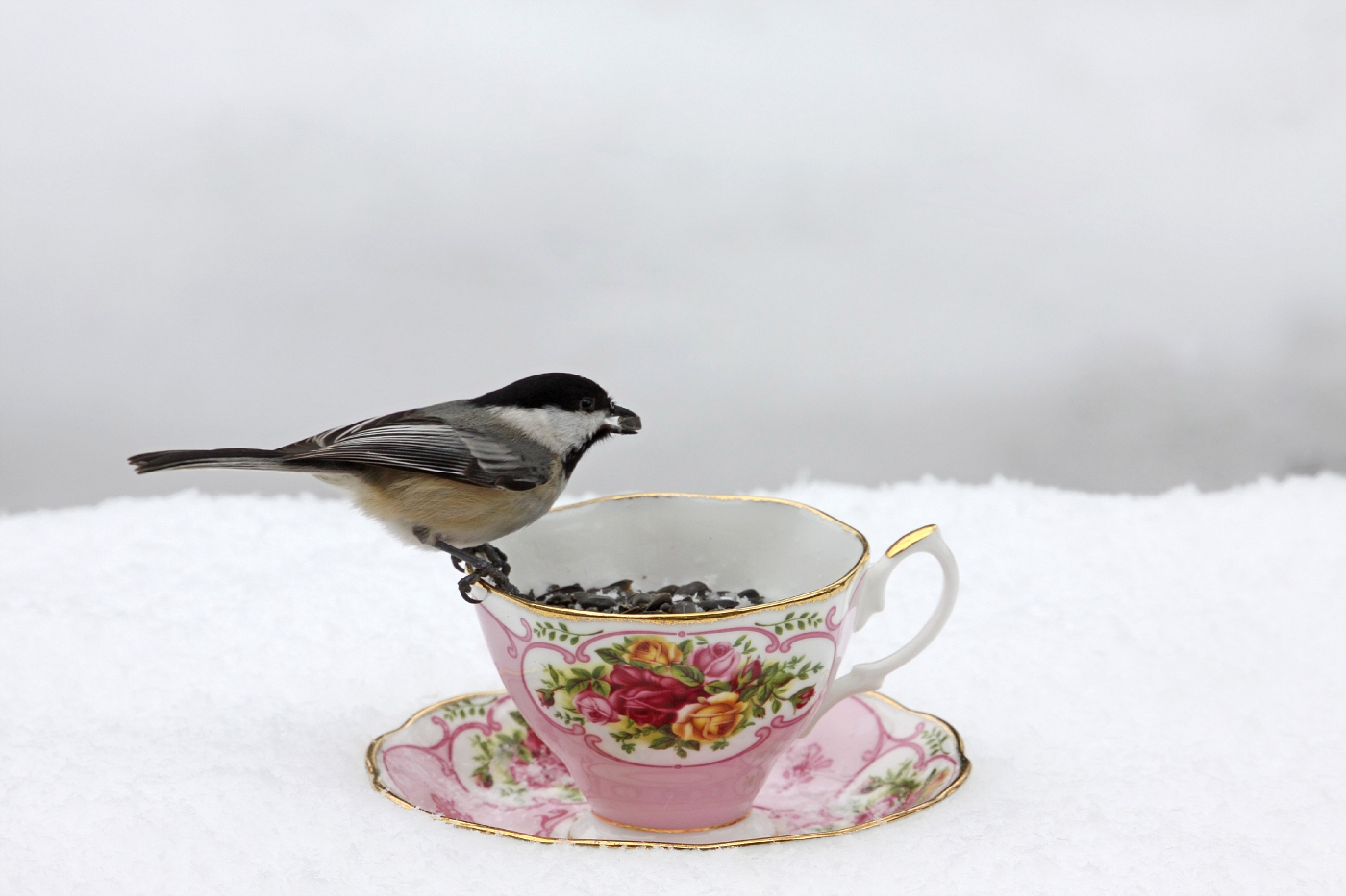 Teacup at the Feeder #2