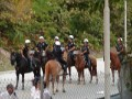 Miami Carnival  2006, Mounted Police